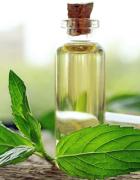 Tinh dầu bạc hà có tác dụng đuổi muỗi hiệu quả nhanh và an toàn