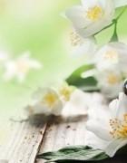 Tìm hiểu tinh dầu hoa nhài có tác dụng gì