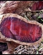 Tinh dầu Gỗ Hồng - Rose wood