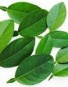 Tinh dầu Lá Chanh-Lemon leaf